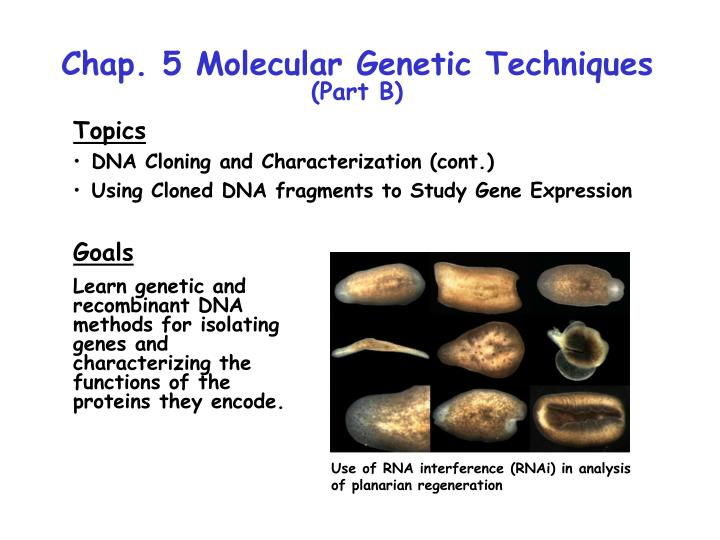 Chap. 5 Molecular Genetic Techniques