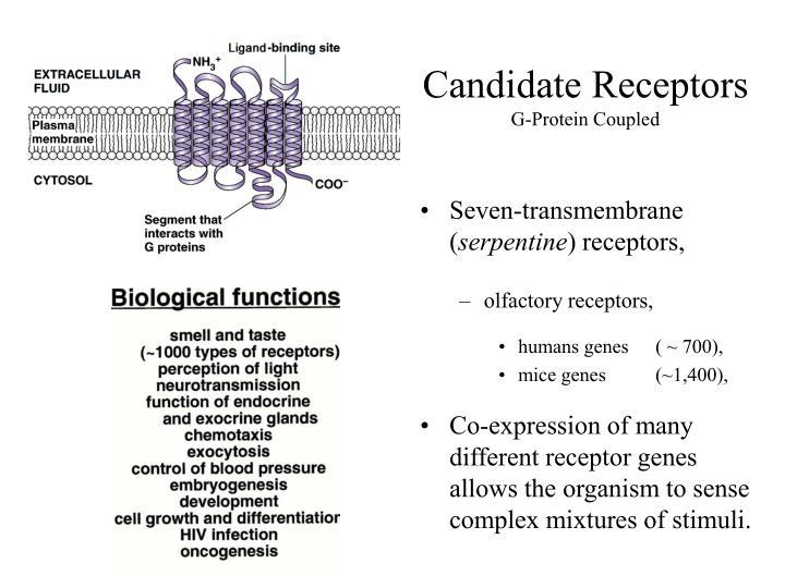 Candidate Receptors