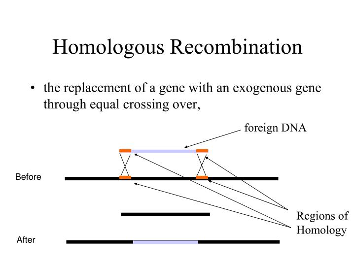 foreign DNA