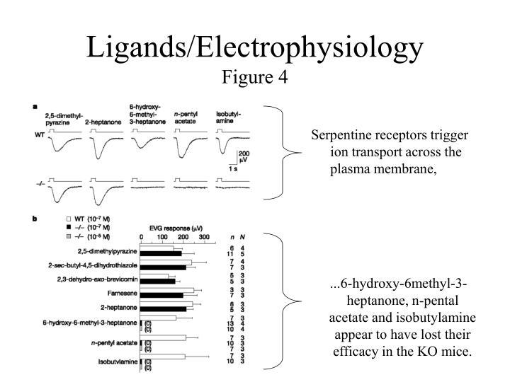Ligands/Electrophysiology