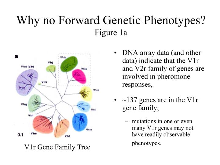 Why no Forward Genetic Phenotypes?