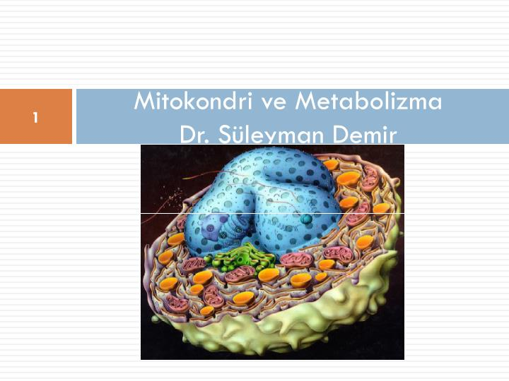 Mitokondri ve Metabolizma