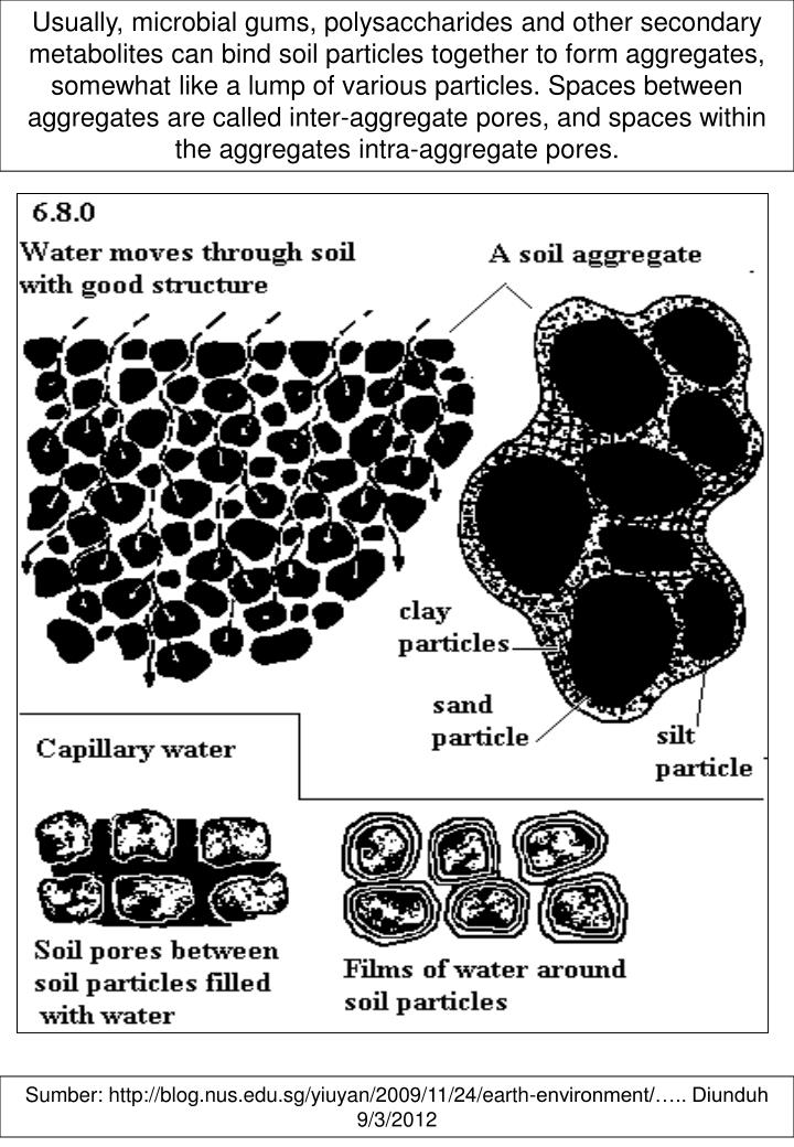 Usually, microbial gums, polysaccharides and other secondary metabolites can bind soil particles together to form aggregates, somewhat like a lump of various particles. Spaces between aggregates are called inter-aggregate pores, and spaces within the aggregates intra-aggregate pores.