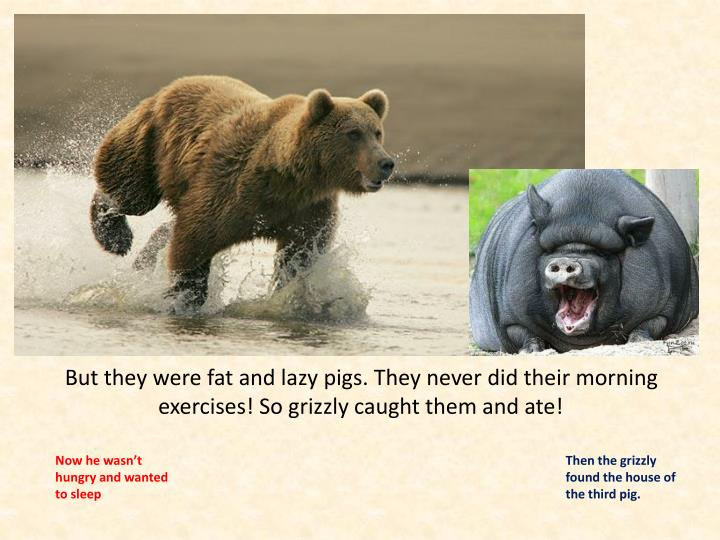 But they were fat and lazy pigs. They never did their morning exercises! So grizzly caught them and ate!