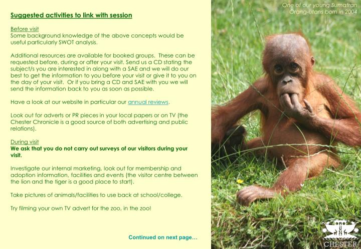 One of our young Sumatran Orang-utans born in 2004