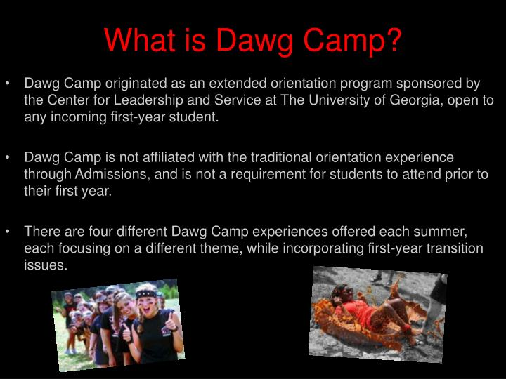 What is dawg camp