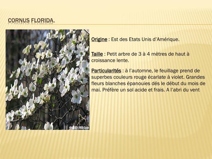 Cornus florida.