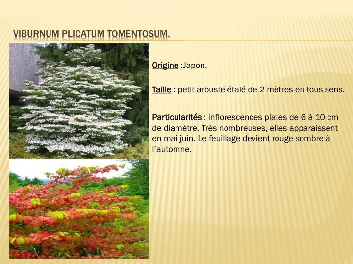 Viburnum plicatum tomentosum.
