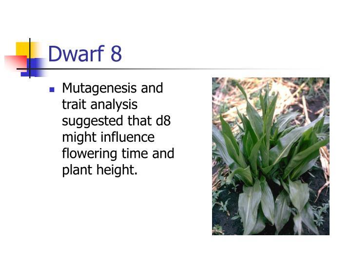 Dwarf 8