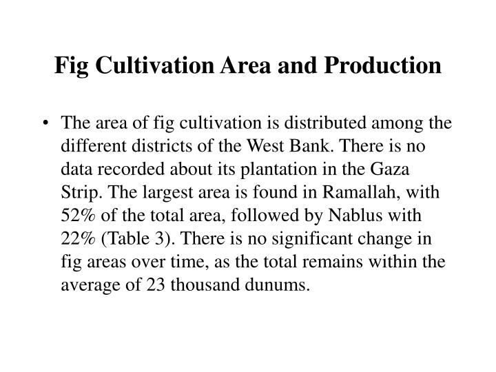 Fig Cultivation Area and Production