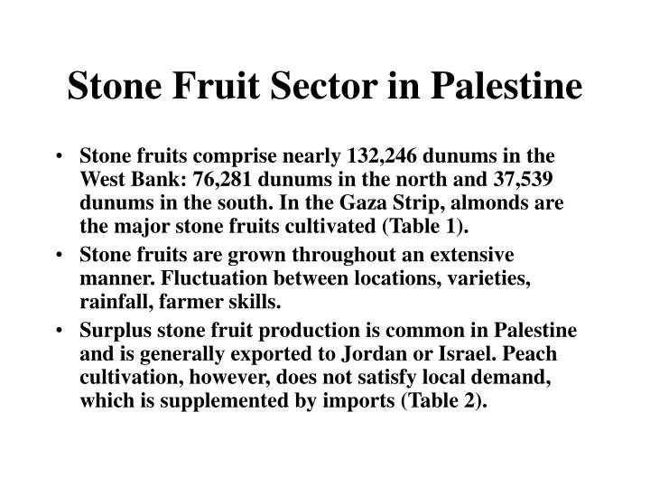 Stone Fruit Sector in Palestine