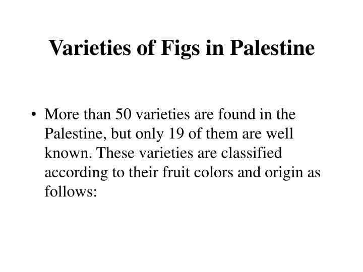 Varieties of Figs in Palestine