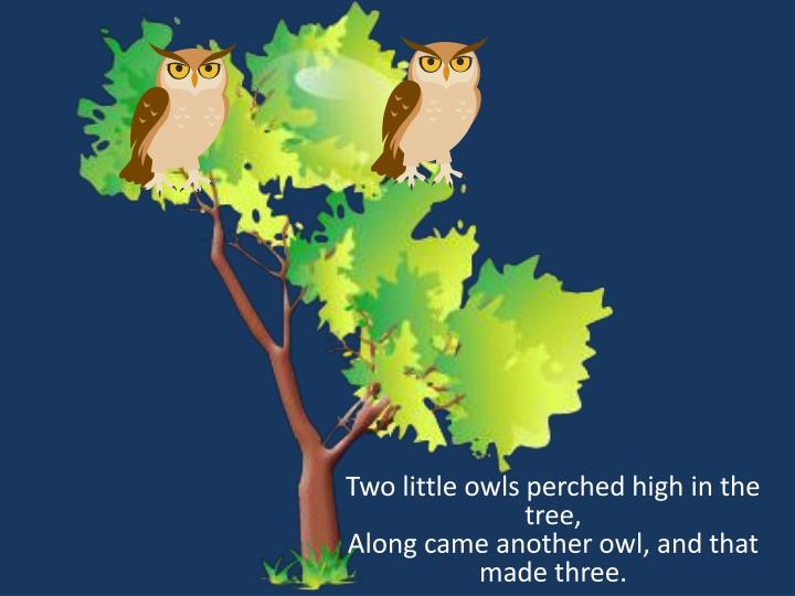 Two little owls perched high in the tree along came another owl and that made three