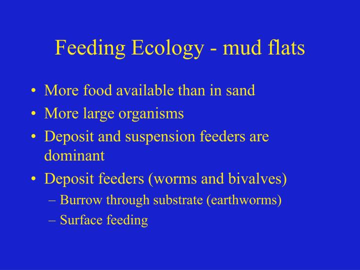 Feeding Ecology - mud flats