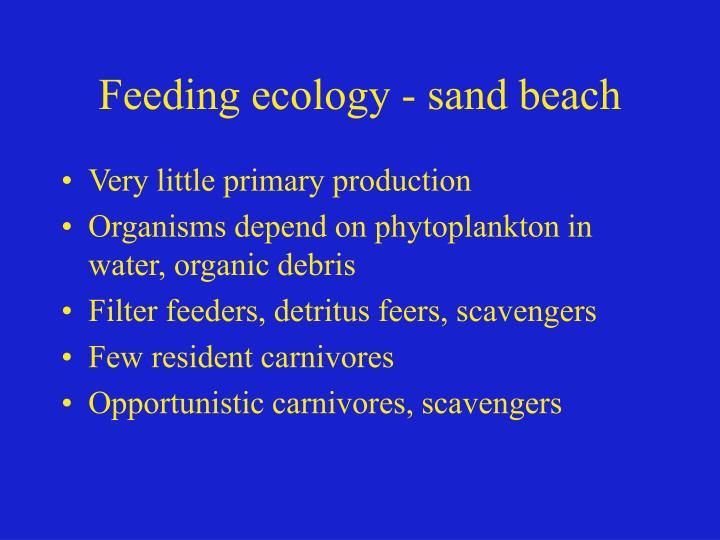 Feeding ecology - sand beach