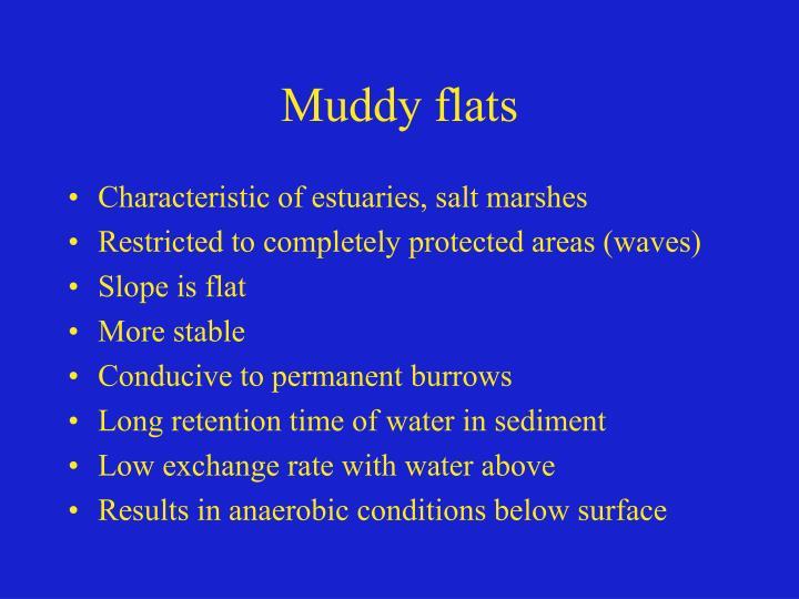Muddy flats