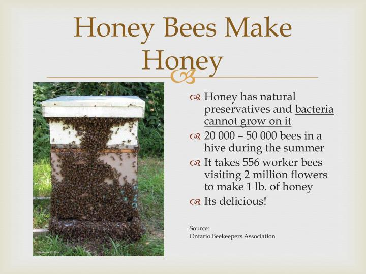 Honey Bees Make Honey