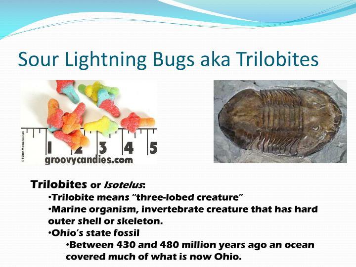 Sour Lightning Bugs aka Trilobites