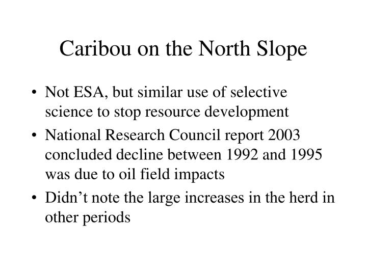 Caribou on the North Slope