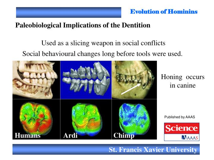 Evolution of Hominins