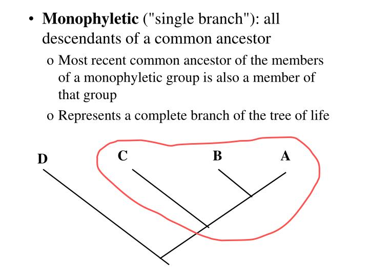 Monophyletic