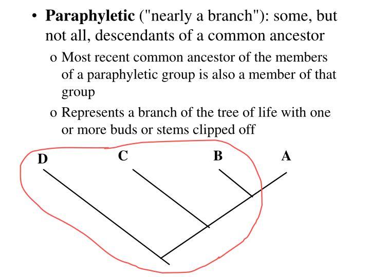 Paraphyletic