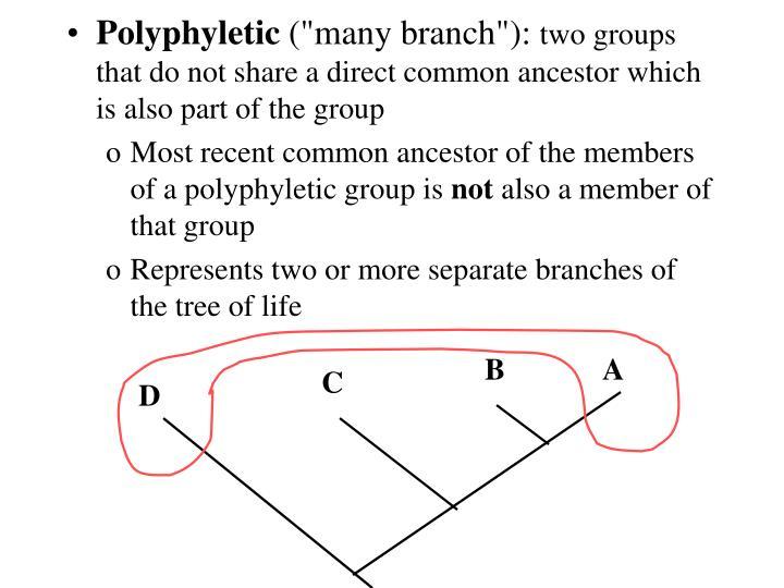 Polyphyletic