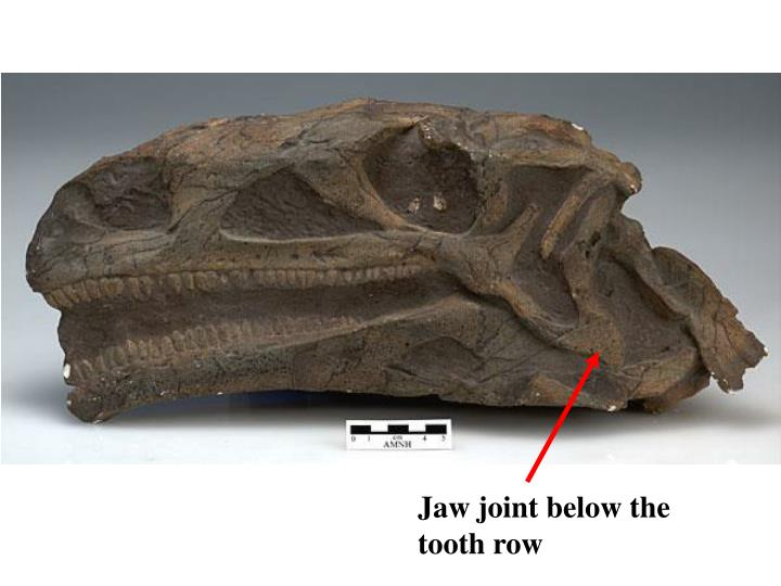 Jaw joint below the