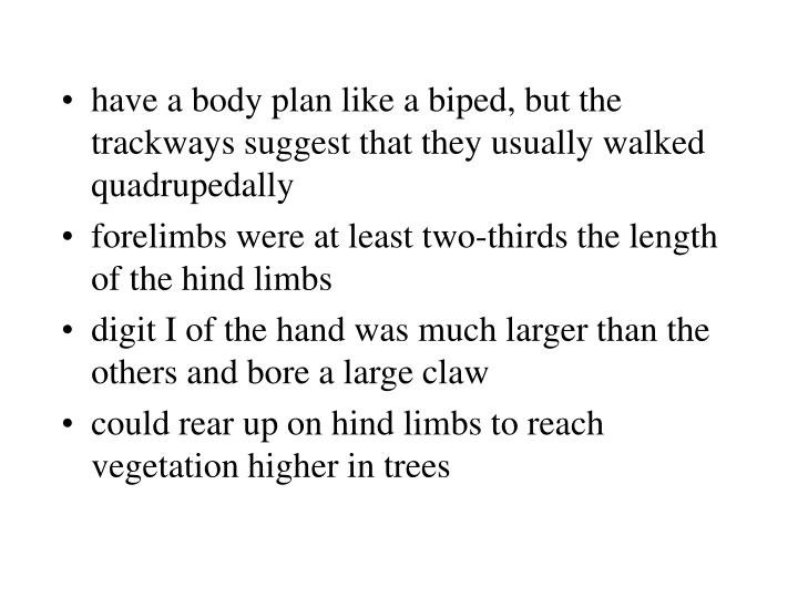 have a body plan like a biped, but the trackways suggest that they usually walked quadrupedally