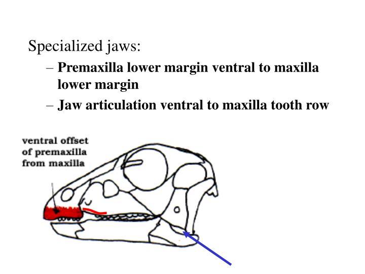 Specialized jaws: