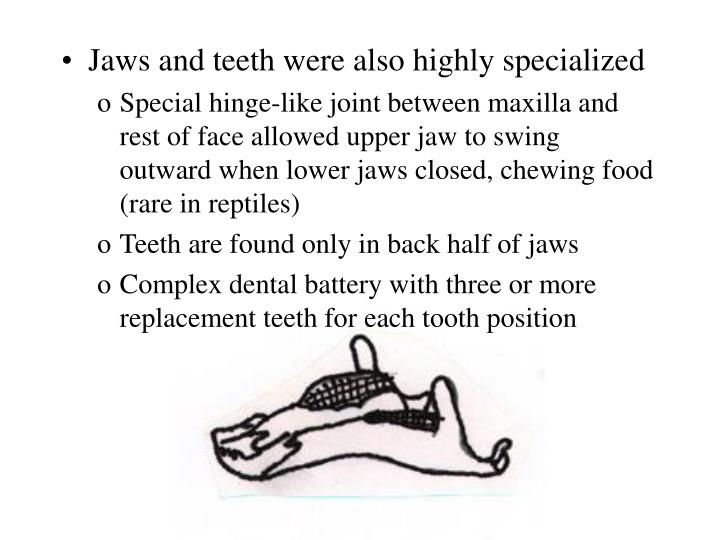 Jaws and teeth were also highly specialized