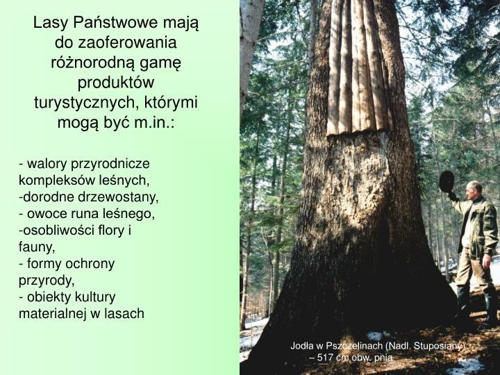 Lasy Pastwowe maj do zaoferowania rnorodn gam produktw turystycznych, ktrymi mog by m.in.: