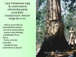 lasy pa stwowe maj do zaoferowania r norodn gam produkt w turystycznych kt rymi mog by m in