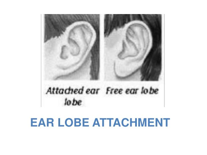 EAR LOBE ATTACHMENT