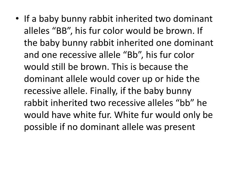 "If a baby bunny rabbit inherited two dominant alleles ""BB"", his fur color would be brown. If the baby bunny rabbit inherited one dominant and one recessive allele ""Bb"", his fur color would still be brown. This is because the dominant allele would cover up or hide the recessive allele. Finally, if the baby bunny rabbit inherited two recessive alleles ""bb"" he would have white fur. White fur would only be possible if no dominant allele was present"