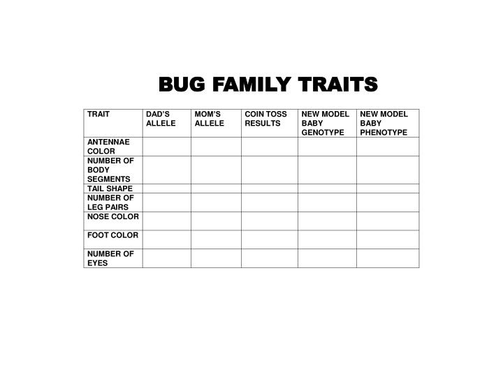 BUG FAMILY TRAITS