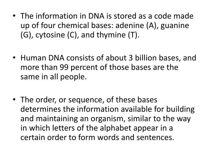The information in DNA is stored as a code made up of four chemical bases: adenine (A), guanine (G), cytosine (C), and thymine (T).