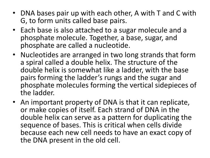 DNA bases pair up with each other, A with T and C with G, to form units called base pairs.