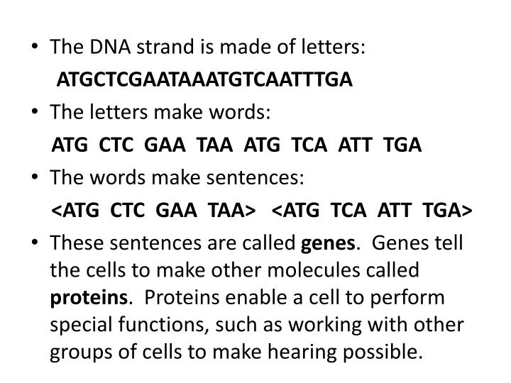 The DNA strand is made of letters: