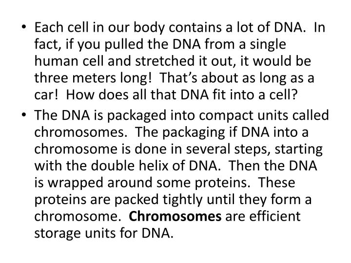 Each cell in our body contains a lot of DNA.  In fact, if you pulled the DNA from a single human cell and stretched it out, it would be three meters long!  That's about as long as a car!  How does all that DNA fit into a cell?