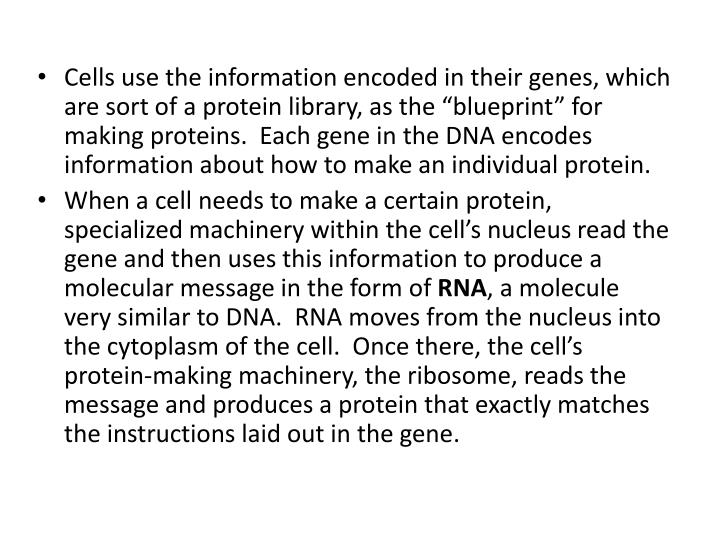 "Cells use the information encoded in their genes, which are sort of a protein library, as the ""blueprint"" for making proteins.  Each gene in the DNA encodes information about how to make an individual protein."