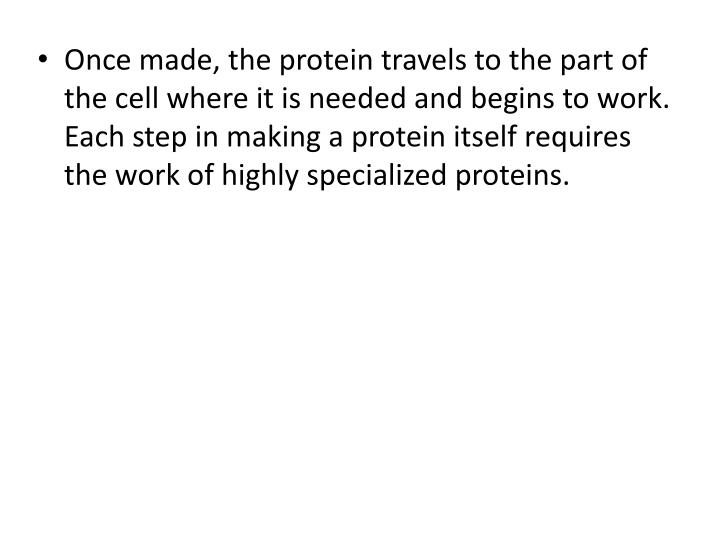Once made, the protein travels to the part of the cell where it is needed and begins to work.  Each step in making a protein itself requires the work of highly specialized proteins.