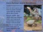 geochelone nigra hoodensis