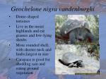 geochelone nigra vandenburghi