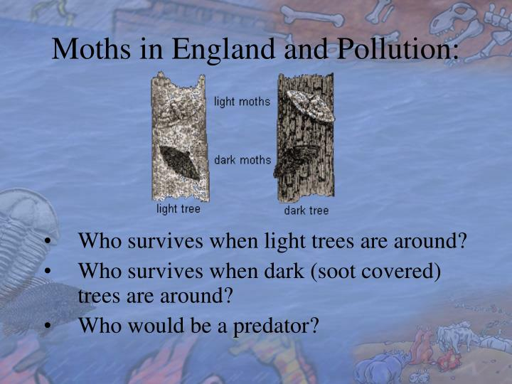Moths in England and Pollution: