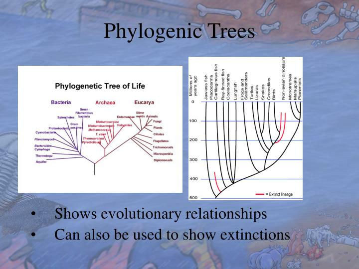 Phylogenic Trees