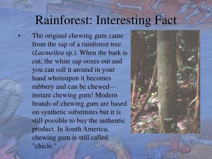 Rainforest: Interesting Fact