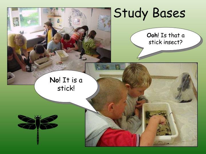 Study Bases