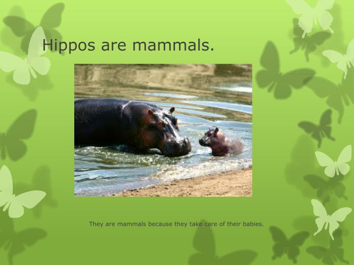 Hippos are mammals.