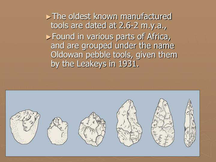 The oldest known manufactured tools are dated at 2.6-2 m.y.a.,